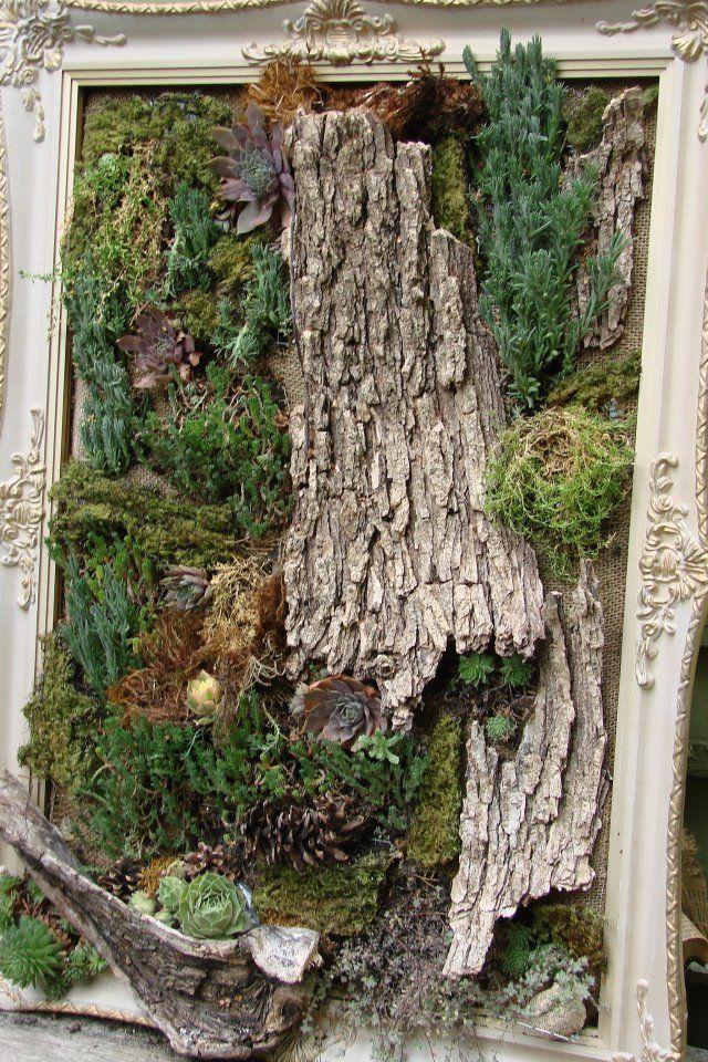 Jeanne Sammons saw this framed 'living art' on a garden walk   more living art ... framed succulents with bark etc.. LOVE!