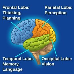 Lobes of The Brain and Their Functions