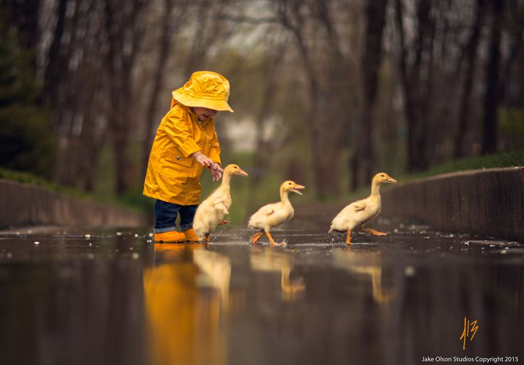 Photograph Get Your Ducks In A Row by Jake Olson Studios on 500px