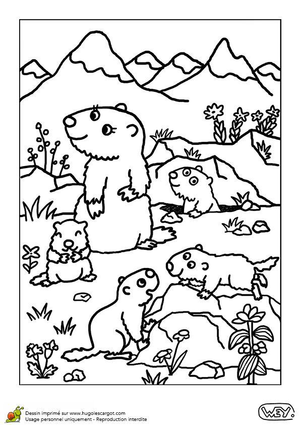 Bebe Animaux Maman Marmotte Et Ses Bebes, page 9 sur 12 sur HugoLescargot.com