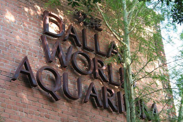 Dallas Aquarium : fav place!
