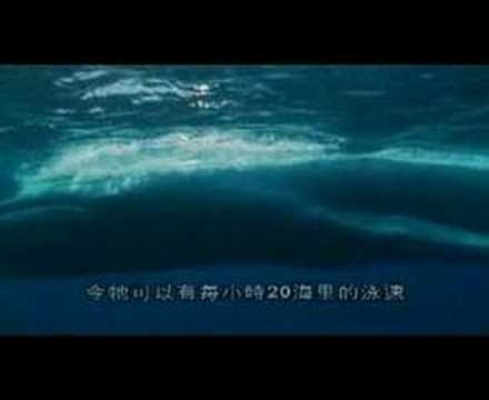 """Blue Whale.  Here is a short video from """"The Blue Planet"""" narrated by David Attenborough about the blue whale. Gorgeous!!"""