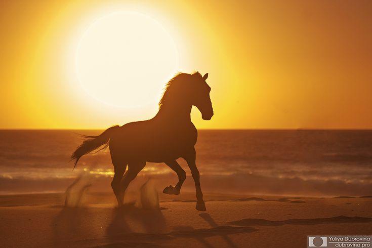 Закат для фотографа - уже праздник))) а с конем, да на океане - подавно! Жеребец лузитано Табернейро и его закат  Автор: Yuliya Dubrovina