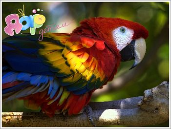 Детям о попугаях
