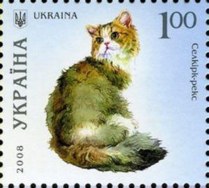 Selkirk Rex (Felis silvestris catus)
