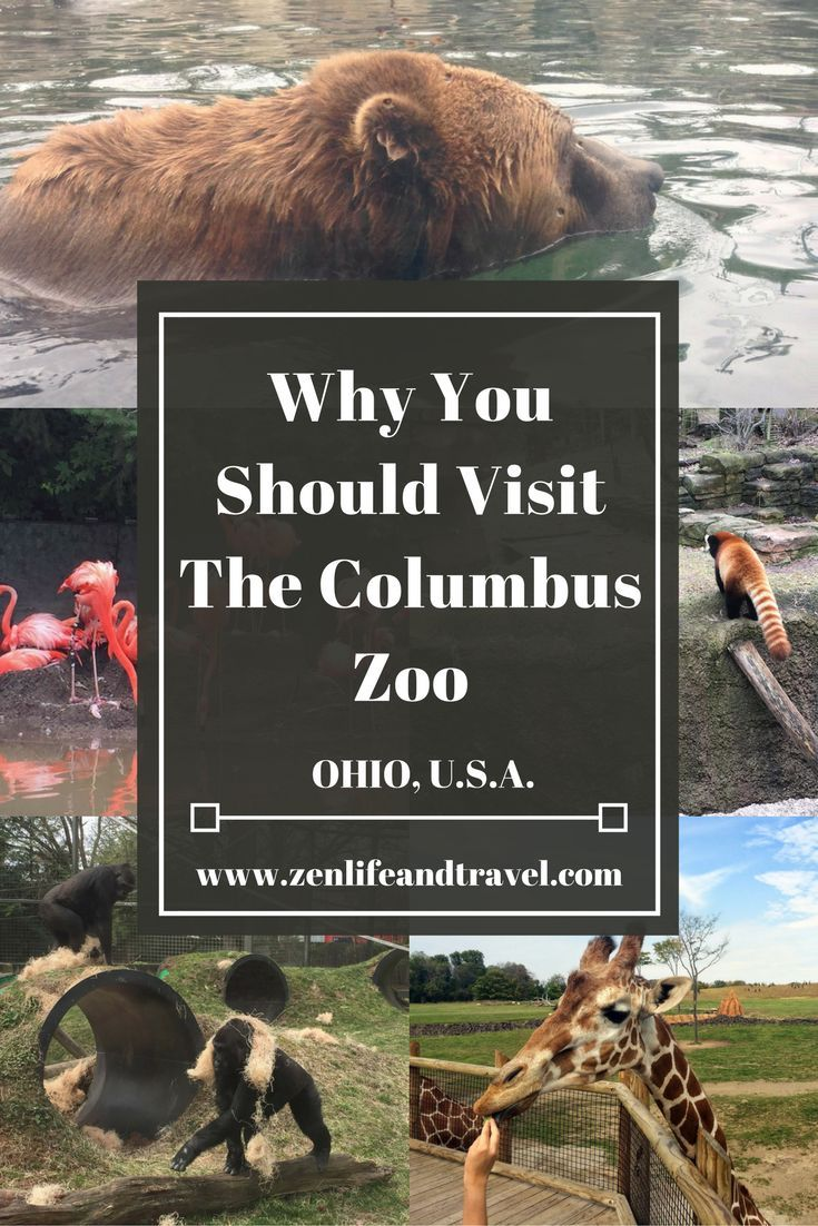 why zoos should close Should we ban the keeping of animals in zoos  animal welfare problems with some zoos does not meant that all zoos should be shut down.