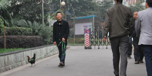 """Chicken Walker"" Tops China Global Entrepreneurship Week (GEW) 2011 Contest"