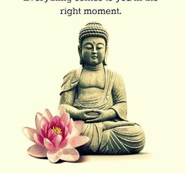 Sharing this quote #buddhism #buddha #judecelebrant