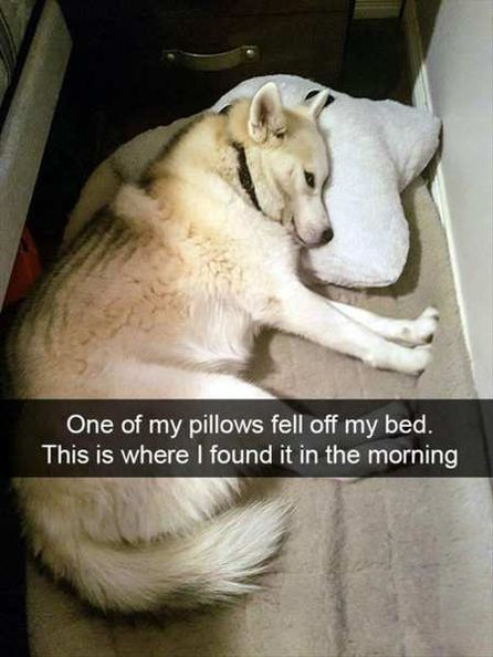 15  Funny Animal Pictures