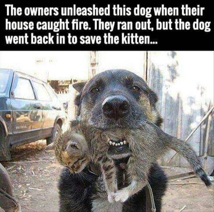 Faith In Humanity Restored – 18 Pics
