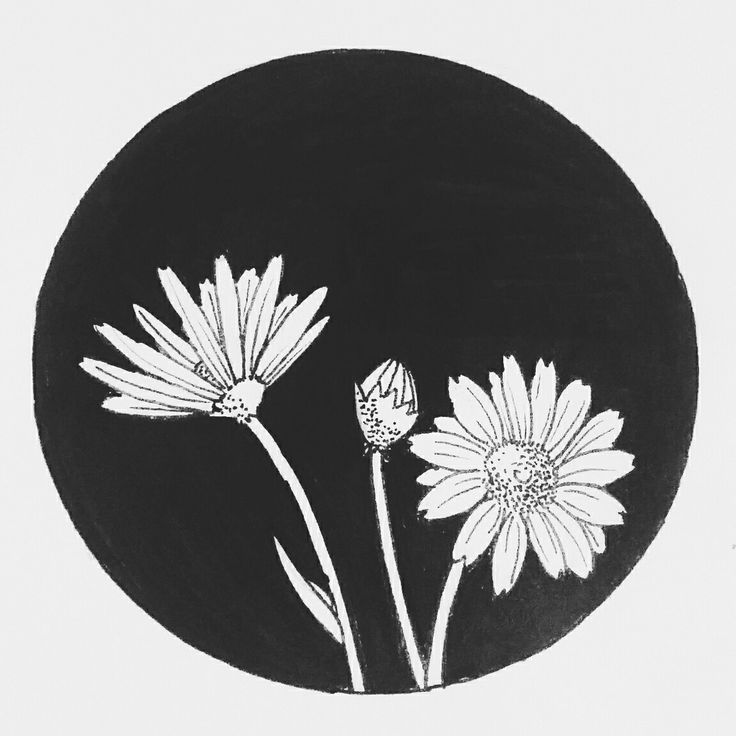 Daisy, blackwork | Ana María Guarín