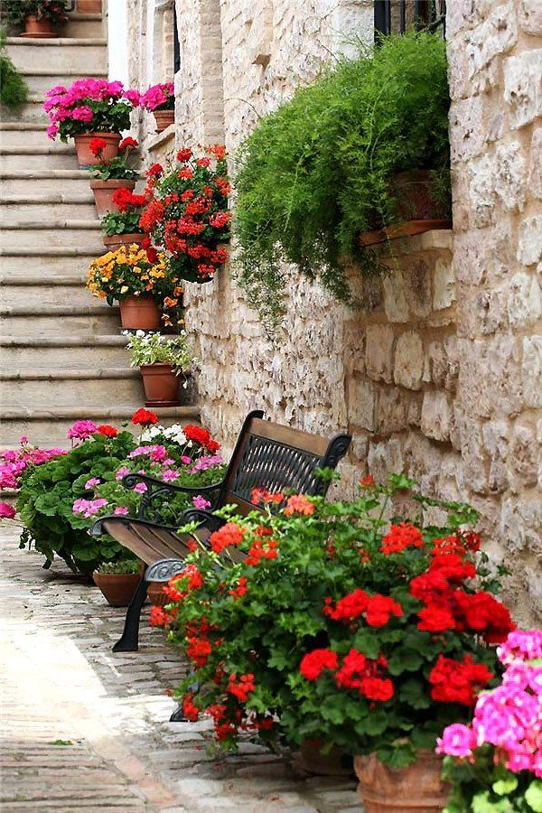 Flowers of Spello, Perugia, Italy, Umbria