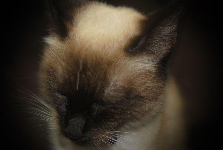 Mi pequeña Selina