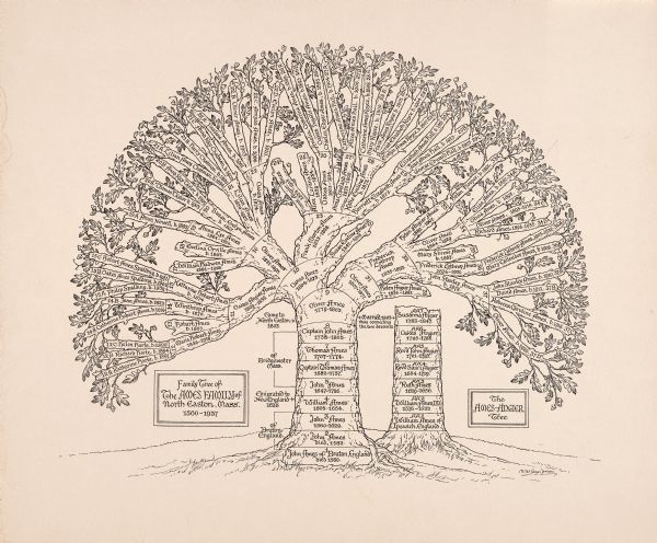 Best 20+ Family tree drawing ideas on Pinterest   Family trees ...