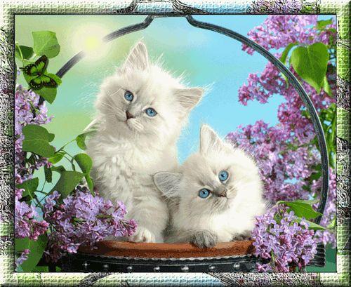 Белые котята, Фото животных
