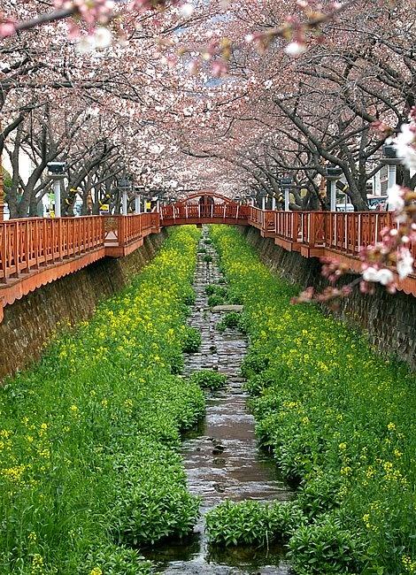 somewhere in Korea; picture book pretty! BEAUTIFUL