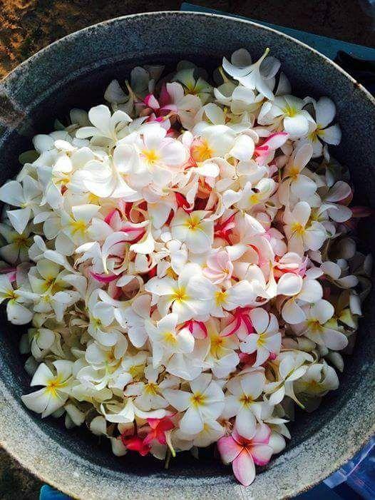 107 besten Çiçekler & flowers Bilder auf Pinterest | Schöne blumen ...
