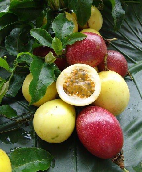 les 63 meilleures images du tableau fruits exotiques sur pinterest fruits exotiques arbres. Black Bedroom Furniture Sets. Home Design Ideas