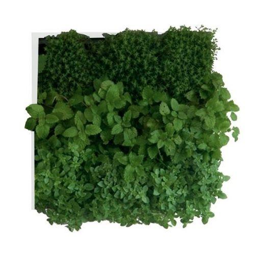 Verticale plantenbak voor aan de muur. Superleuk! #garden