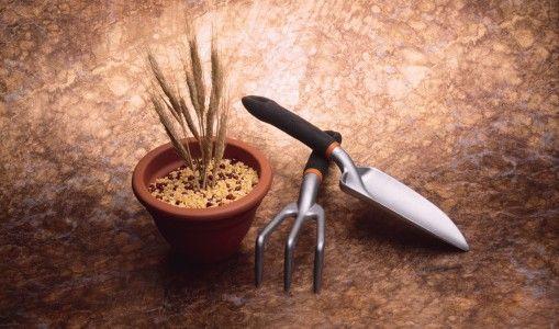 Grani antichi: la pasta parla siciliano. La riscoperta della biodiversità a  tutela della ricchezza culturale  ed…