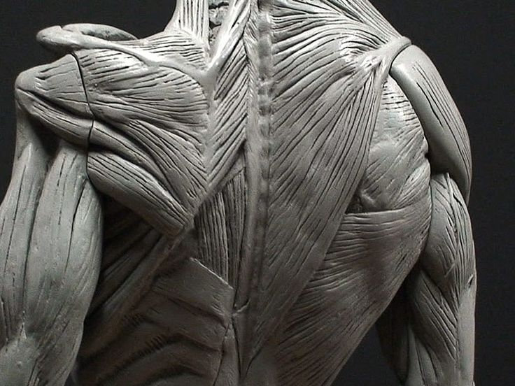 111 best Male anatomy images on Pinterest | Anatomy reference, Human ...