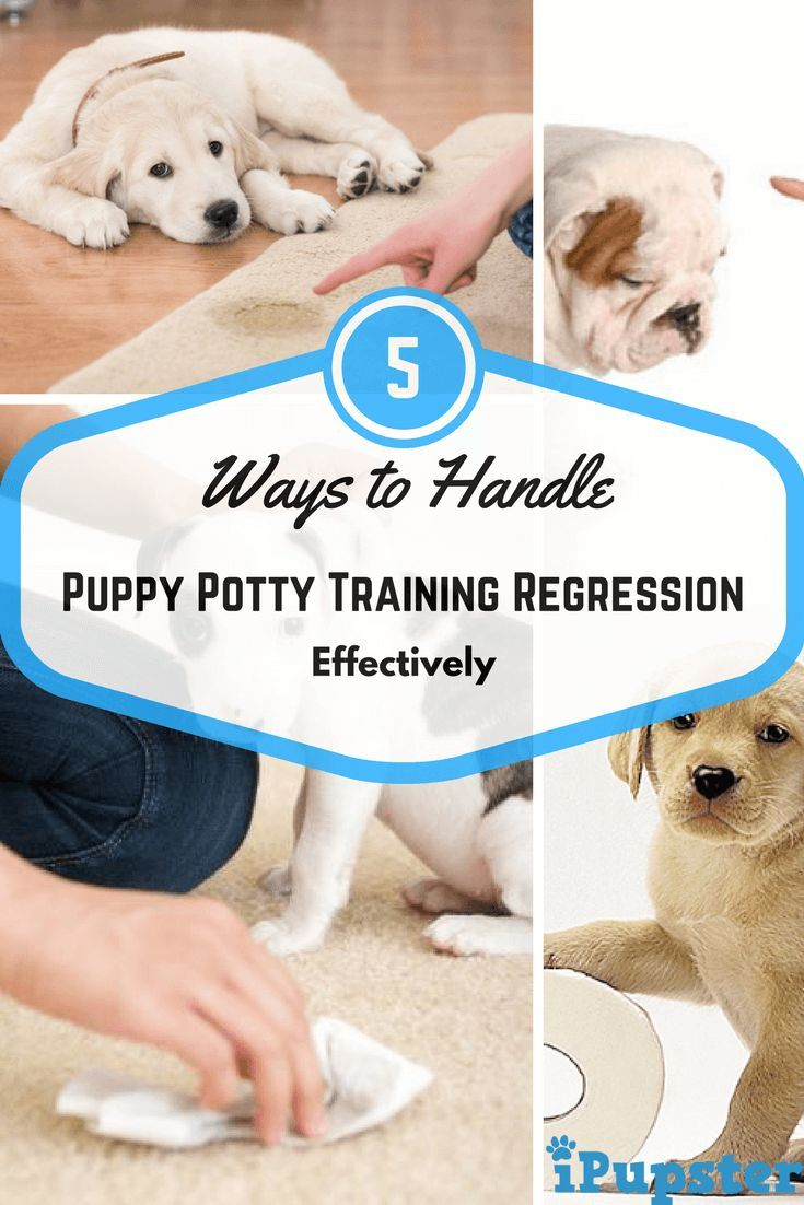 Five Dog Grooming Tips And Tricks Potty Training Regression