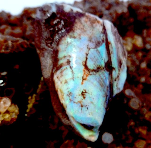 OPALIZED FOSSIL SHELL C/P  80.60 CARATS JO 2063