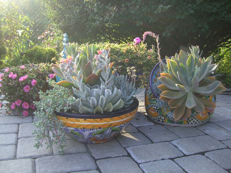 Lush Succulents In Colorful Talavera Pottery.