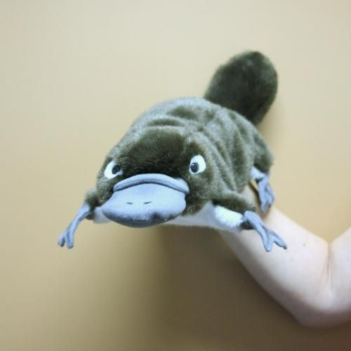 Platypus Puppet  This beautiful hand-puppet is an a wonderful tool to nourish the imagination, whilst teaching kids about the world of animals. Crafted by HANSA, these high quality hand puppets are hand airbrushed to create delicate details of each animal characteristic. Hansa create toys exclusively for Zoo's around the world. Recommended for ages 3+