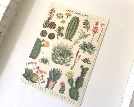 Vintage Style Cacti and Succulent Plant Botany Chart