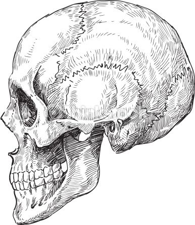 Arte vectorial : human skull sketch