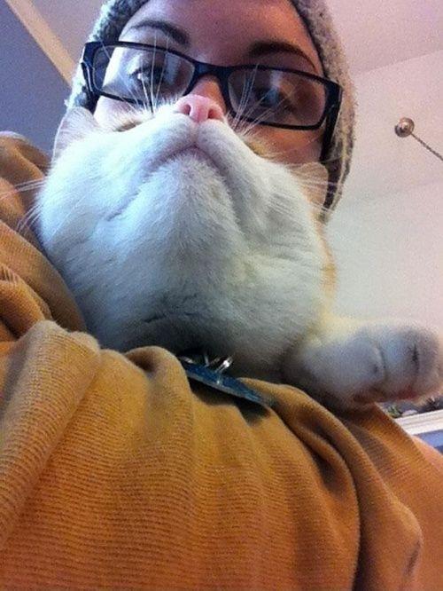 Борода из кота - новая причуда владельцев домашних животных - petterest.net