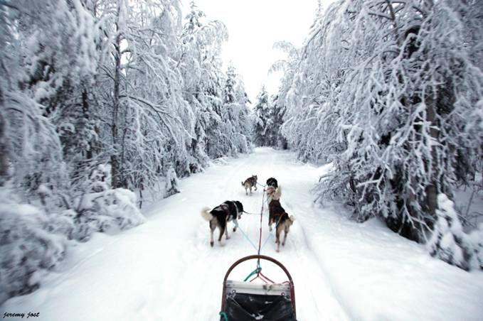 traîneau tiré par des chiens #laponie