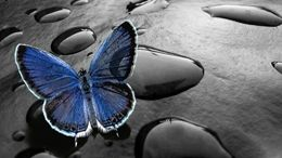 Amazing Glowing Butterfly Full HD wallpapers free download at Hdwallpapersz.net