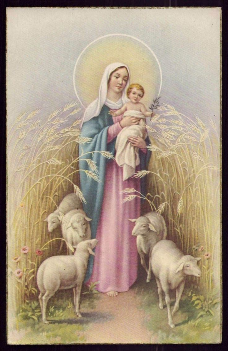 OUR LADY GOOD SHEPHERDESS w/ LAMBS Vtg GOLD EDGE HOLY CARD POSTCARD FOR SALE • $5.00 • See Photos! Money Back Guarantee. Track Page Views With Auctiva's FREE Counter 401414676301