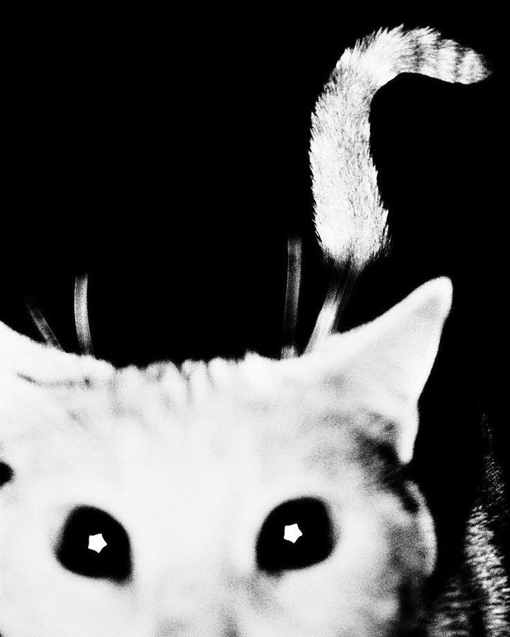 France. 2010. Francoise the neighborhood #cat. ( Sohrab Hura/ #MagnumPhotos) #nationalcatday by magnumphotos: