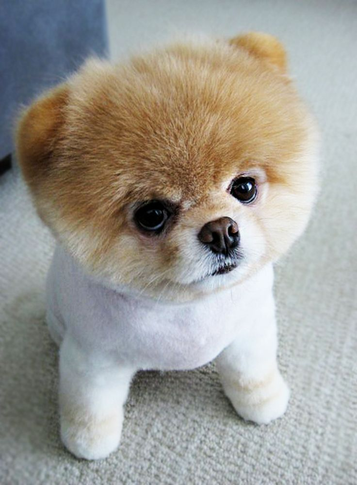 Puppooly is a little cute puppy ) find more http//www