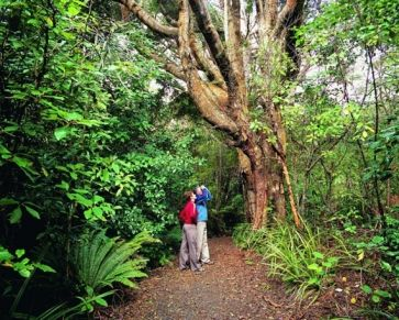 Ulva Island - a birdwatchers' paradise and one of the few open-island sanctuaries in New Zealand.
