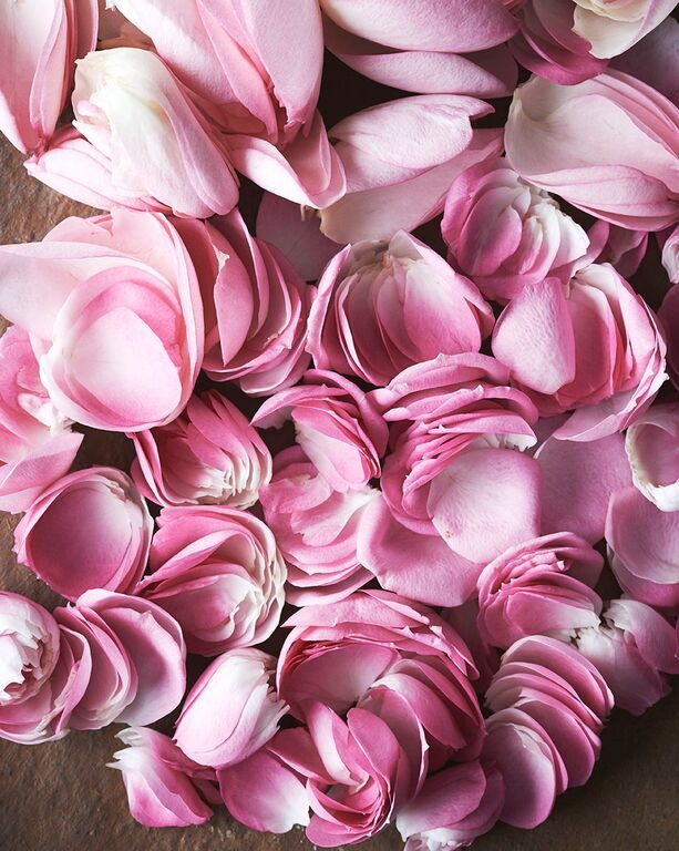 From her organic farm by the sea near Kolding in Denmark, Lis Knudsen is one of our suppliers of the delicate flower petals that go into winterspring's rose hip sorbet.