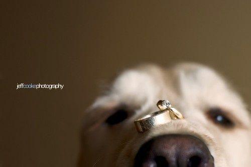 Cutest wedding ring shot ever!