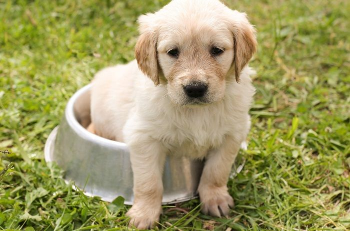 #CleanIngredients  Best dog food for puppies born from large dogs #dogs #cats