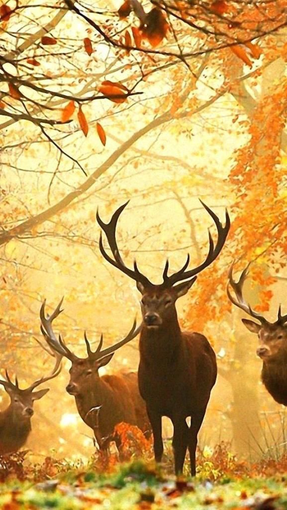 hunting wallpaper for iphone  iPhone X Screensaver hunting wallpaper awesome hunting wallpaper ...