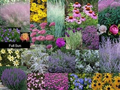 Full sun perennials gardening pinterest sun for Full sun perennial garden designs