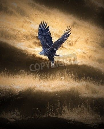 A majestic white-tailed eagle in flight.