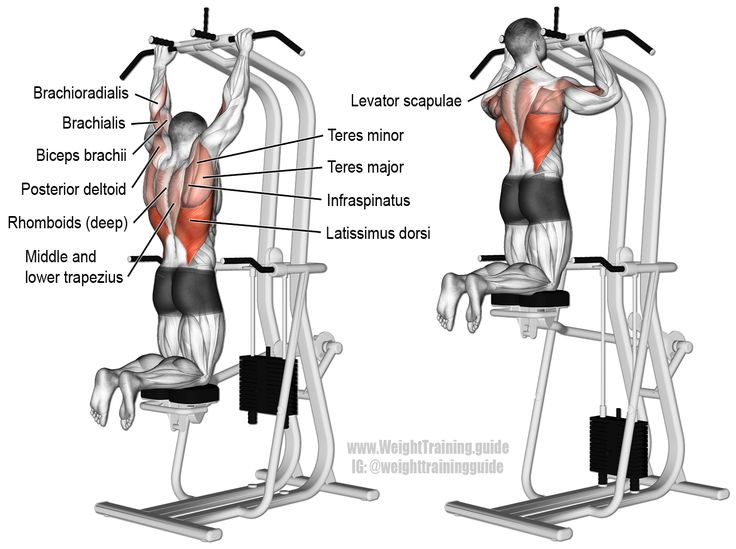 Assisted pull-up. A compound exercise. Target muscle: Latissimus Dorsi. Synergistic muscles: Brachialis, Brachioradialis, Biceps Brachii, Teres Major, Teres Minor, Infraspinatus, Posterior Deltoid, Rhomboids, Middle and Lower Trapezius, Levator Scapulae, and Pectoralis Minor.