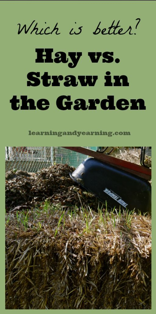 Hay vs. Straw in the Garden: Which is Better? Everyone tells me my choice is wrong until they hear my reasoning and my method. Organic gardening and natural living at its best!