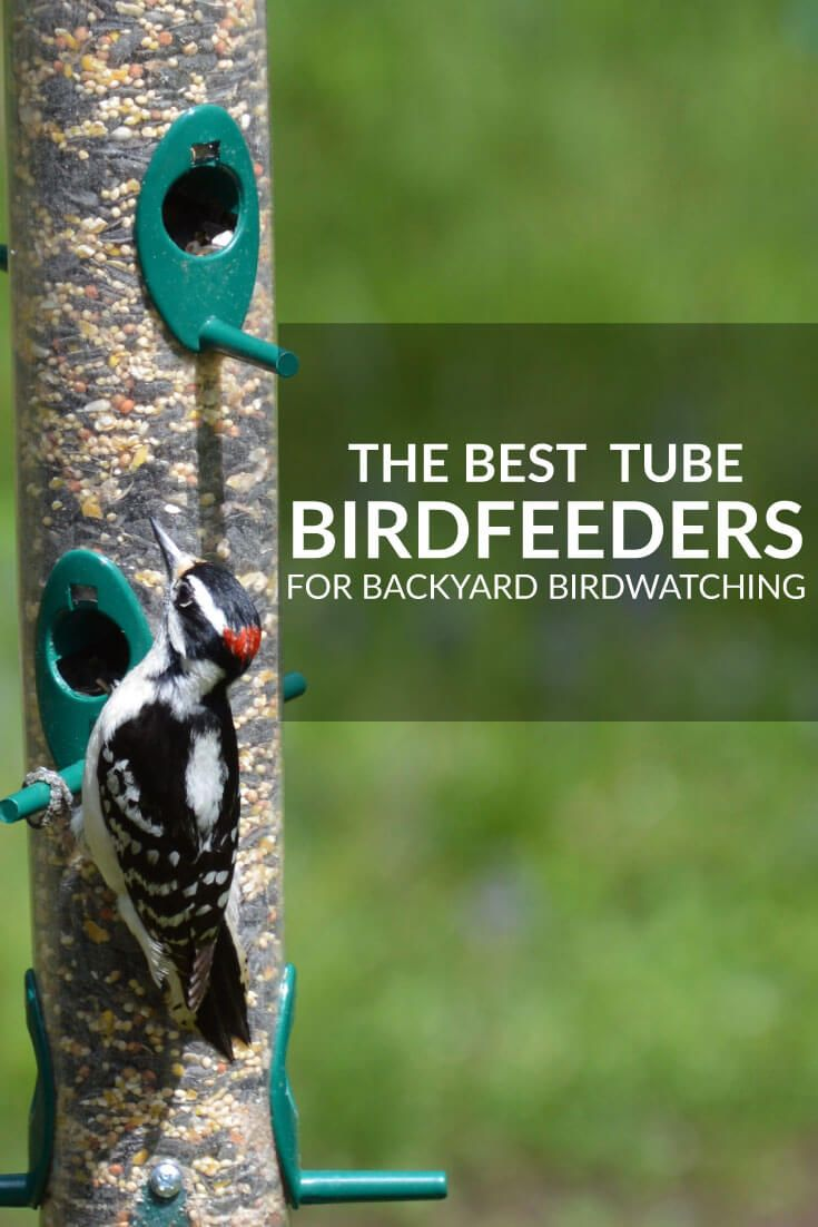 Best Bird Feeders For Backyard Birdwatching   Tube Feeders