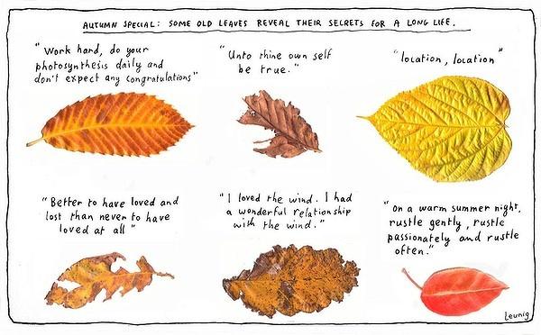 Michael Leunig; Leaf wisdom