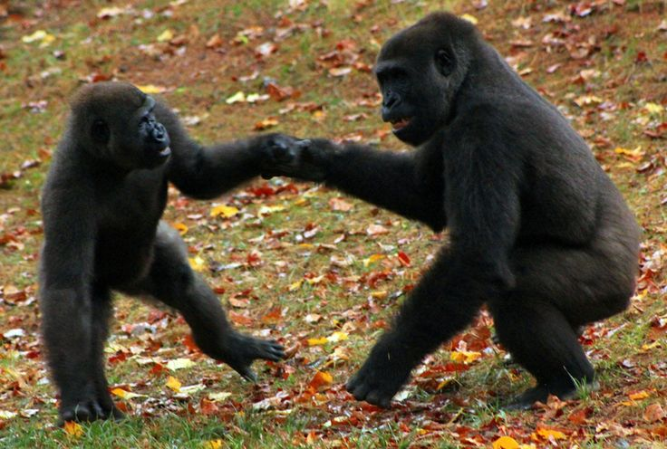 atlanta zoo memorial day weekend