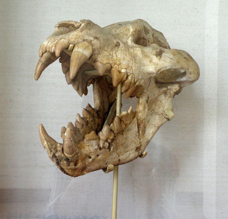 https://i.pinimg.com/736x/4d/ce/83/4dce83dea3320ce49b69269f4f3b9dc6--animal-anatomy-a-skull.jpg